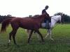 pony-service